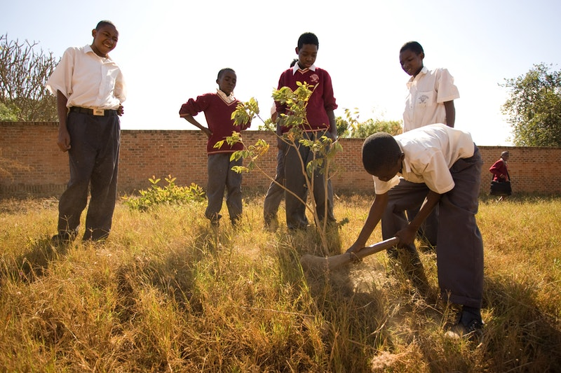 Studenst at Bambino School, a Bahá'í-inspired school in Lilongwe, Malawi plant a